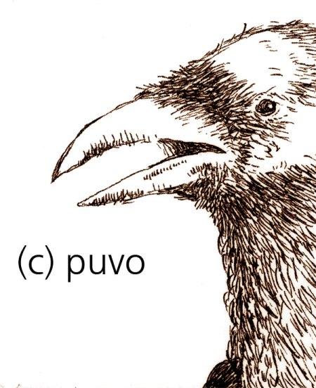Rabe - Strichzeichnung von puvo productions
